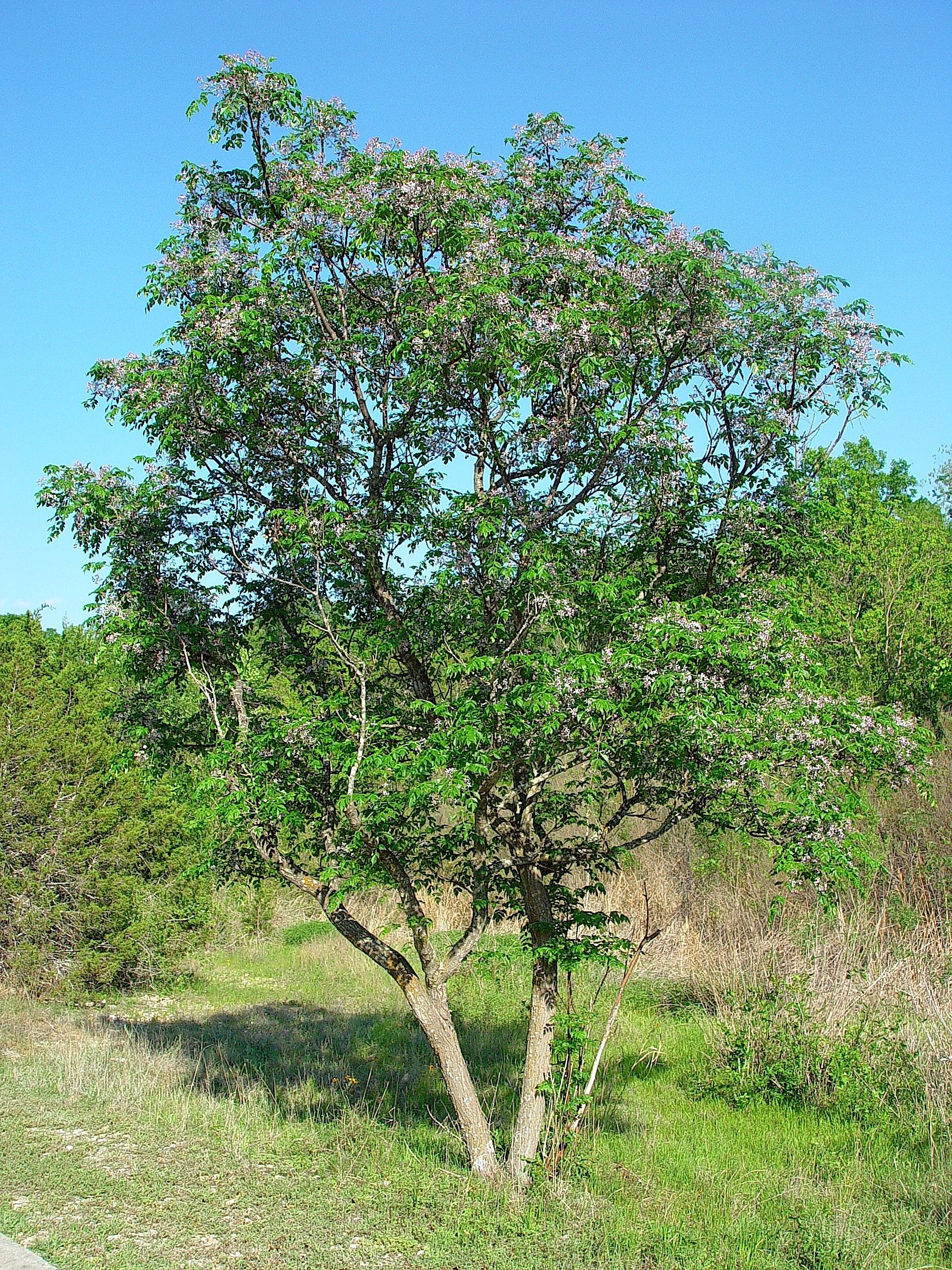 Berry Springs Dangerous Plants